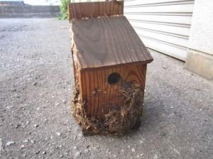 巣箱にスズメバチ